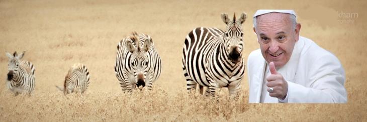 zebra matrimonio